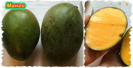 Манго (Mangifera indica)